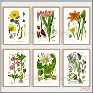 Botanikai illusztrációk